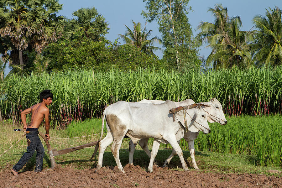 Attend These Points To The Farmers –Agriculture